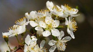 חמש דרכים בהן האביב יכול להיכנס לחיפוש העבודה שלכם