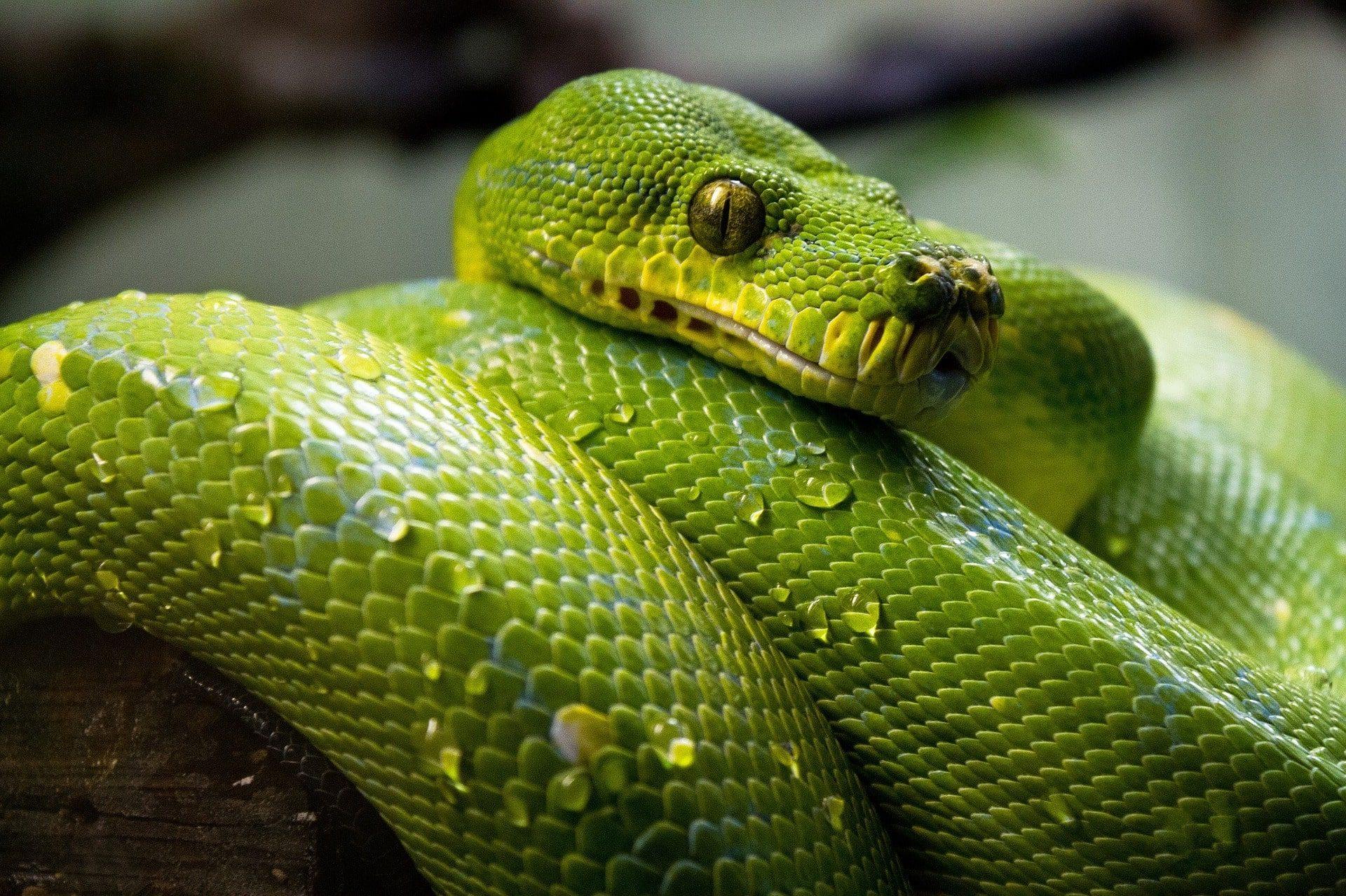 שפת ה-Python היא המפתח לעולם ה-Data Science